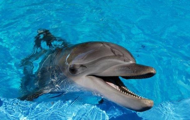 ХАМАС поймал израильского дельфина-шпиона