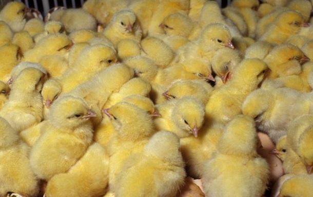 ООН: Домохозяйства Донбасса получат около 7 тысяч цыплят