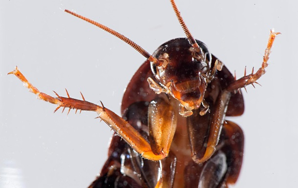 В ухе китайца обнаружили семейство тараканов