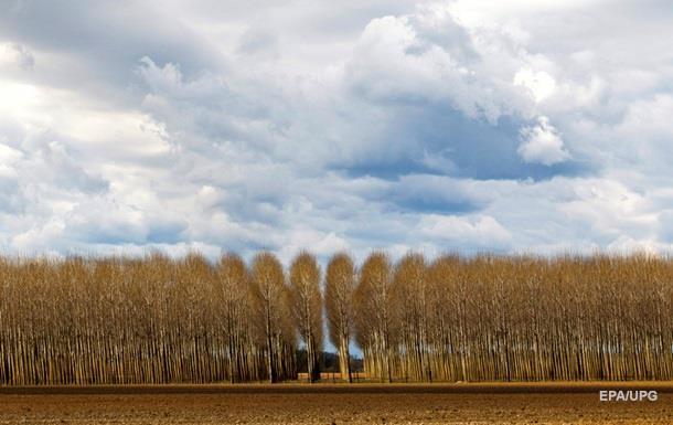 Экологи подсчитали деревья на Земле