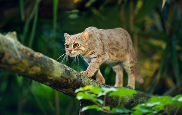 От ржавой кошки до гигантского клопа. Самые странные животные Индии