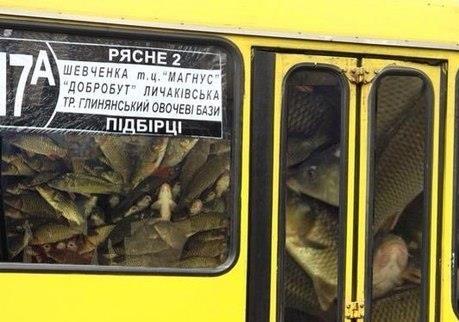 Проблеми транспортної системи Львова