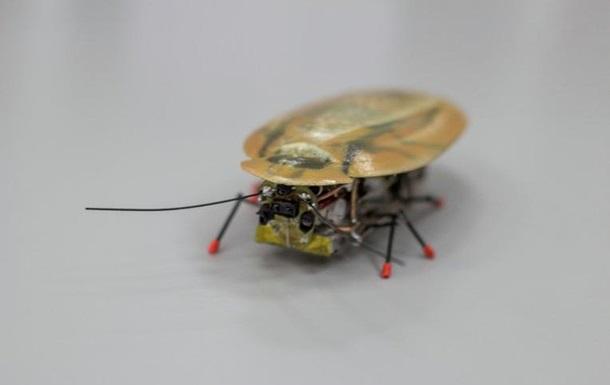 В России создали  таракана-разведчика