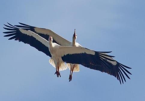 Поглядом птахів  або як змінити систему?