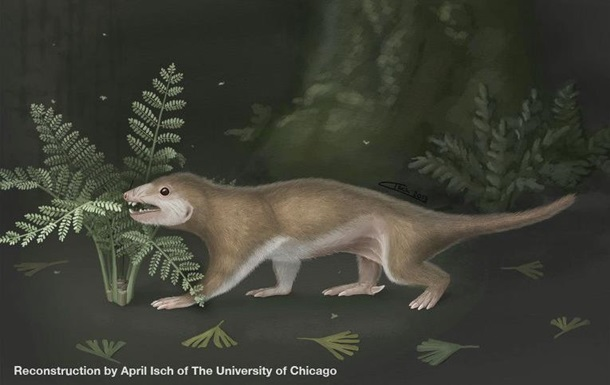 Палеонтологи визначили колір перших ссавців