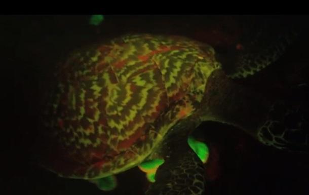 Биологи впервые обнаружили светящуюся черепаху