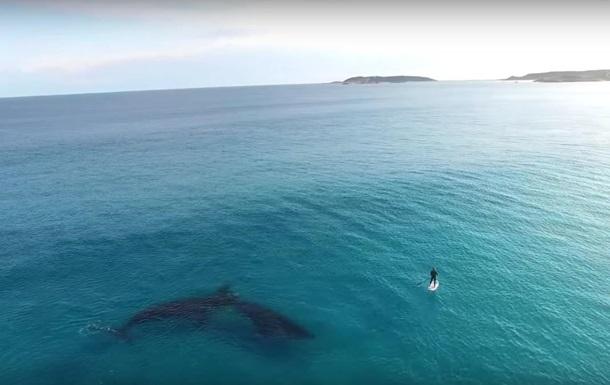 Видео с китами в 4K стало хитом YouTube