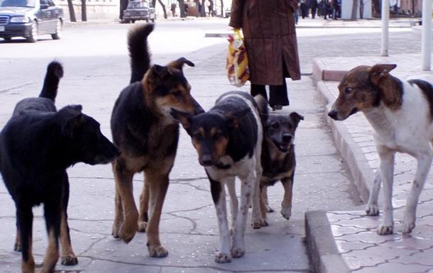 В Киеве возле озера нашли 15 мертвых собак