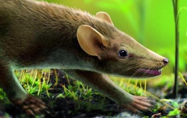 Ученые нашли пушистого ежа-ровесника динозавров