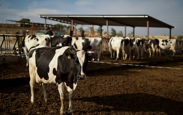 Энергию для завода BMW будут получать из коровьего навоза