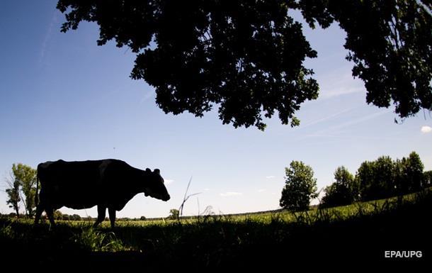 Водитель в России сбил насмерть 40 баранов и пять коров