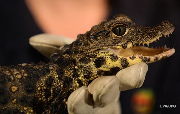 Зоологи Австралии: крокодилы спят с открытым глазом