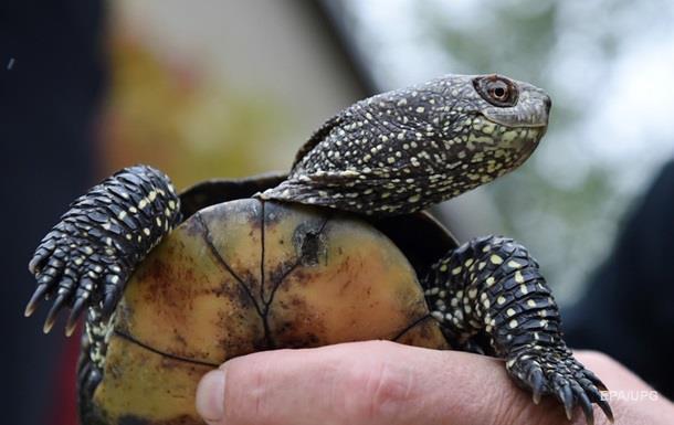 На Галапагосах выявили новый вид черепах