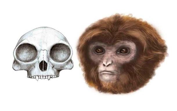 Последнего общего предка обезьян и человека нашли в Испании