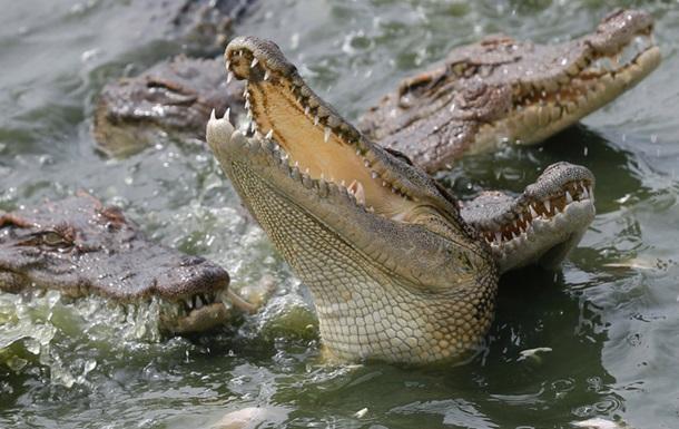 В Индонезии появится тюрьма, которую будут охранять крокодилы
