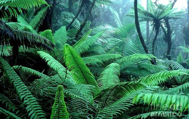 В Арктике обнаружили тропические леса