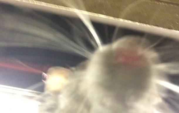 Крыса сделала селфи