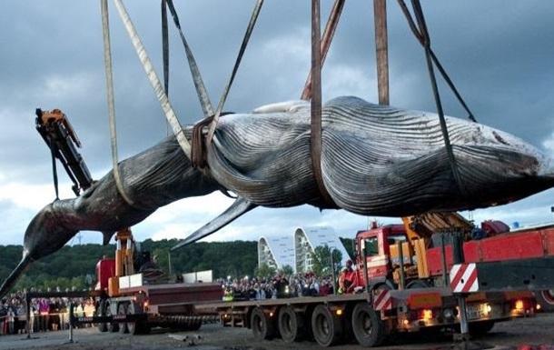 Япония продолжит отбой китов после годового перерыва