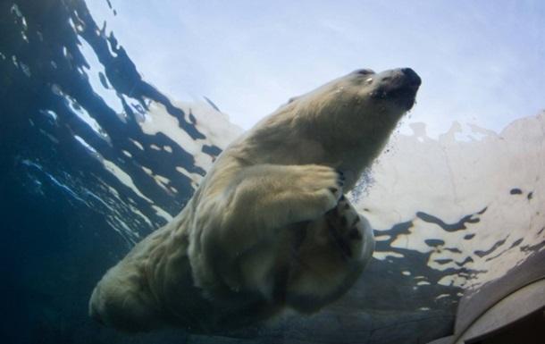 В датском зоопарке мужчина прыгнул в вольер к медведю