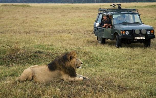 Двух кенийцев обвинили в убийстве львов-телезвезд