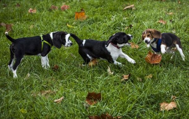 В США родились первые в мире щенки  из пробирки
