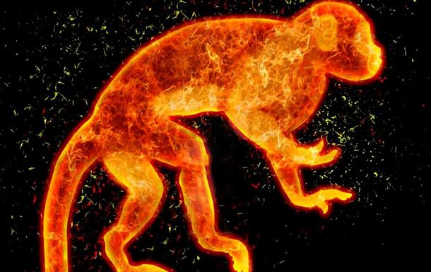 2016-й… Что готовит Украине огненная обезьяна?