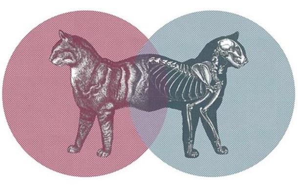 Физики создали  кота Шредингера  длиной в полметра