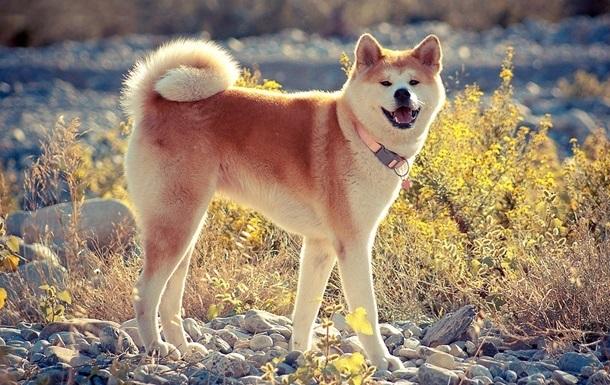 У собак нашли способность к сопереживанию
