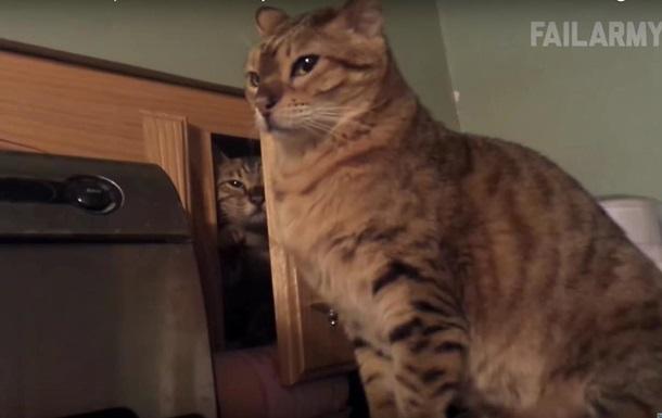 Блогеры показали самые смешные ролики с животными 2015 года