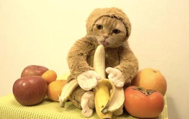 кот-обезьяна с бананом