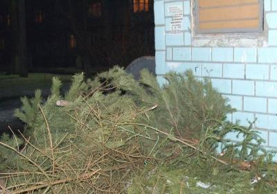 Пункт приема новогодних ёлок будет функционировать в Киеве.
