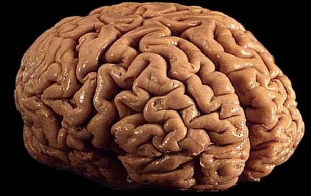 Кокаин провоцирует самоуничтожение клеток мозга - ученые
