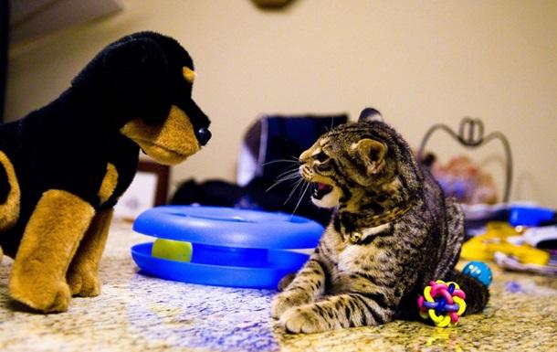 Ученые сравнили любовь кошек и собак к хозяевам