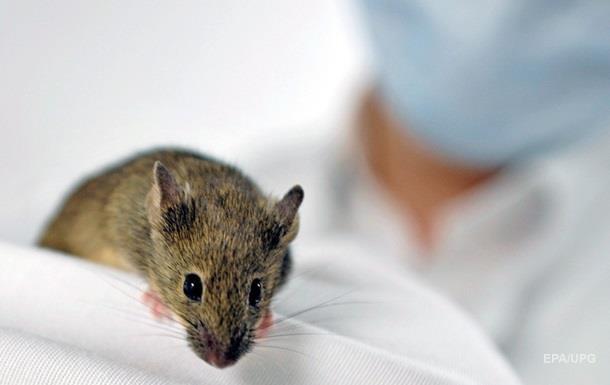 Очистка организма от старых клеток продлевает жизнь - ученые