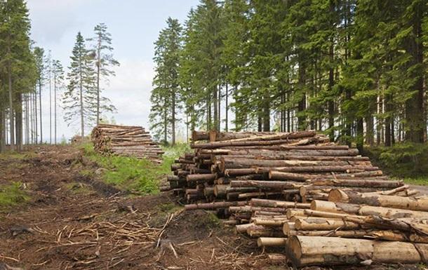 В Албании запретили в течение десяти лет вырубать деревья
