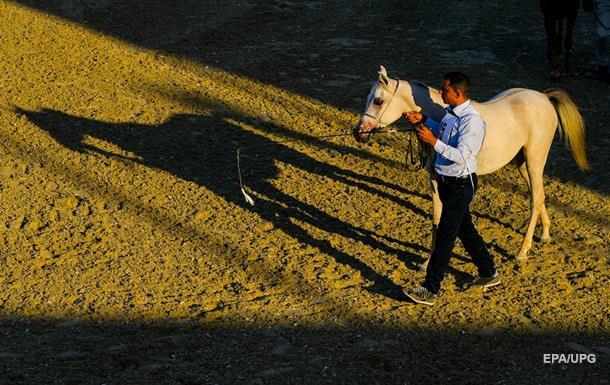 Лошади способны понимать эмоции человека – ученые