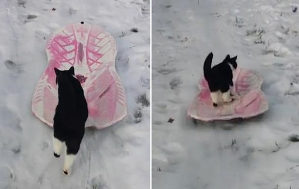 Катающийся на санках кот стал вирусным хитом