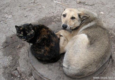 В Полтаві депутати шукають гроші на притулок для тварин