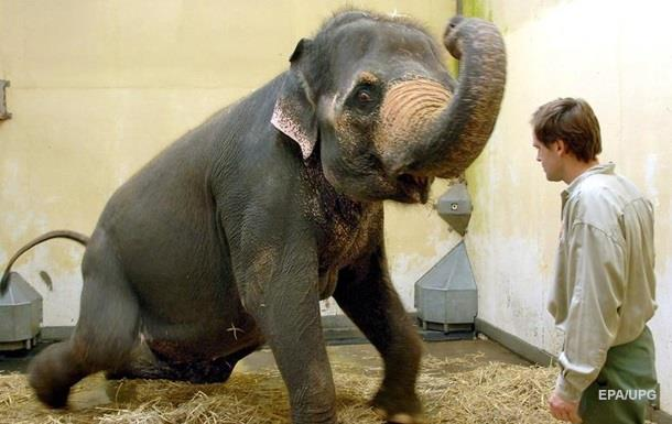 Слон напал на колонну автомобилей в Индии