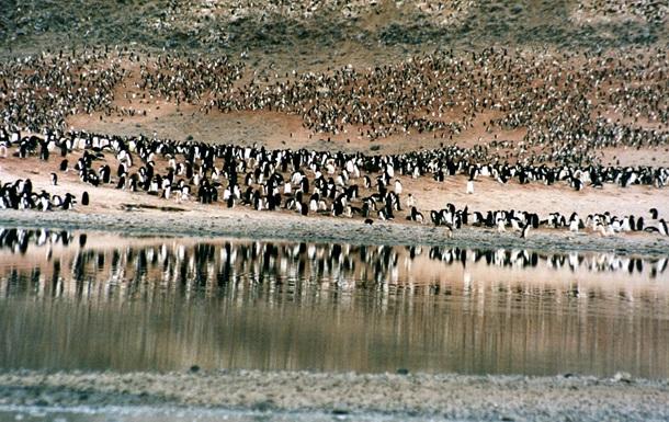 Айсберг привел к гибели популяции в 150 тысяч пингвинов
