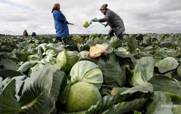 Украина запретила импорт салатов и капусты из Испании