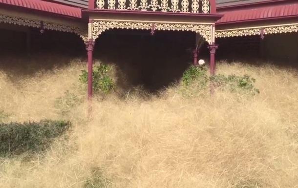 В Австралии перекати-поле спровоцировали массовую панику