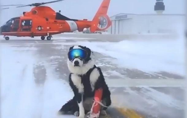 Мичиганский аэропорт принял на службу пса