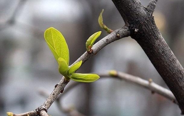 Март в Украине начнется с потепления
