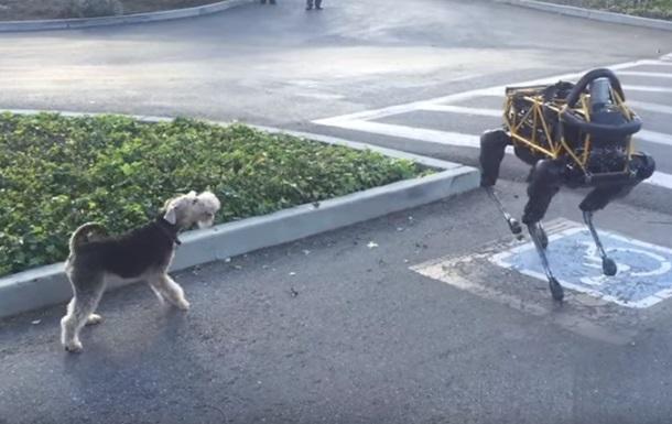 В Сети показали реакцию собаки на четырехлапого робота