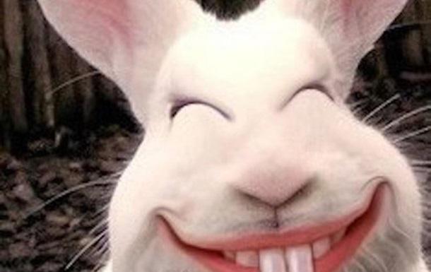 Кролик вернись!