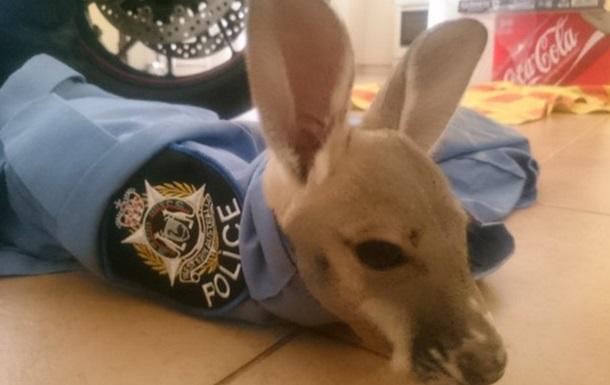 Австралийский полицейский  усыновил  детеныша кенгуру