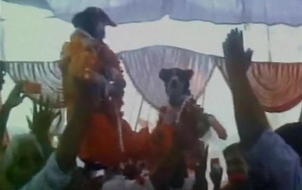 Свадьбу собак в Индии посетили тысячи человек