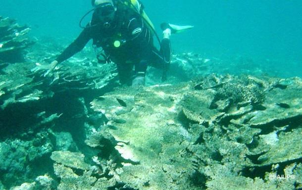 Удар по климату. Кораллы оказались под угрозой исчезновения