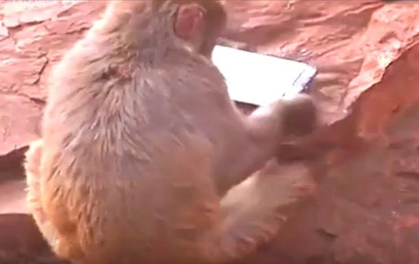 Обезьяна  захватила  смартфон посетительницы зоопарка